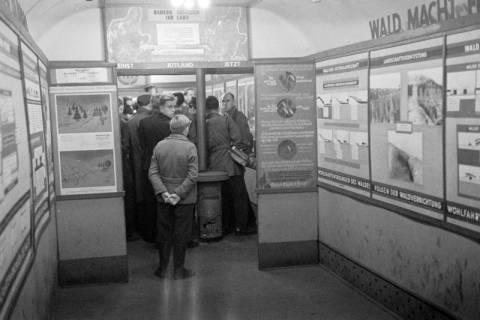 """ARH NL Dierssen 1005/0024, Ausstellung """"Der Wald..."""" (Herzog Ernst-August), 1950"""