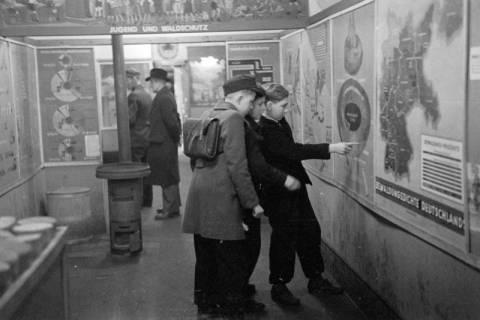 """ARH NL Dierssen 1005/0025, Ausstellung """"Der Wald..."""" (Herzog Ernst-August), 1950"""
