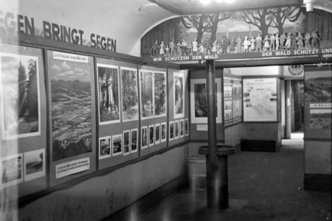 """ARH NL Dierssen 1007/0001, Ausstellung """"Deutscher Wald"""", 1950"""