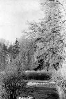 ARH NL Dierssen 1007/0010, Schnee und Reif im Garten des Landratsamtes, 1950
