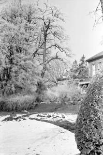 ARH NL Dierssen 1007/0011, Schnee und Reif im Garten des Landratsamtes, 1950