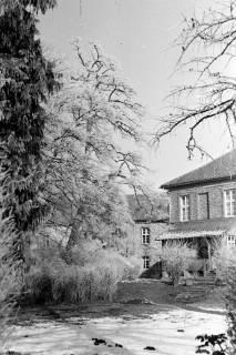 ARH NL Dierssen 1007/0012, Schnee und Reif im Garten des Landratsamtes, 1950