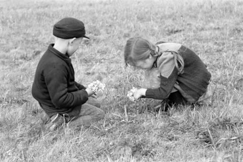 ARH NL Dierssen 1016/0003, Kinder mit Schlüsselblumen, 1950