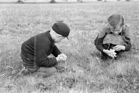 ARH NL Dierssen 1016/0004, Kinder mit Schlüsselblumen, 1950