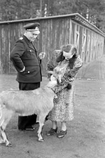ARH NL Dierssen 1017/0002, Abrichteanstalt - Ziegenbock, 1950