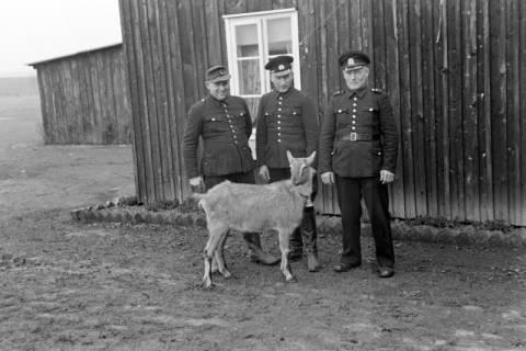 ARH NL Dierssen 1017/0006, Abrichteanstalt - Ziegenbock, 1950