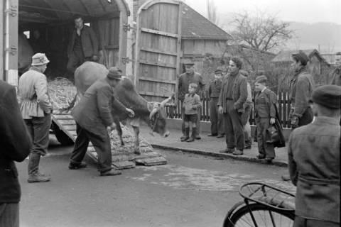 ARH NL Dierssen 1020/0005, Zirkus Althoff, 1950