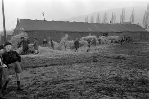 ARH NL Dierssen 1020/0006, Zirkus Althoff, 1950