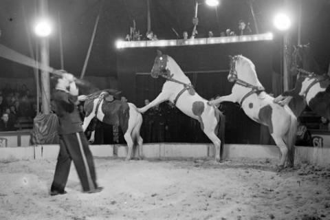 ARH NL Dierssen 1020/0012, Zirkus Althoff, 1950