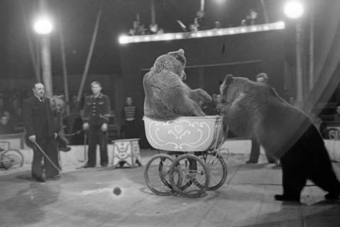 ARH NL Dierssen 1020/0013, Zirkus Althoff, 1950