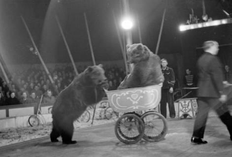 ARH NL Dierssen 1020/0014, Zirkus Althoff, 1950