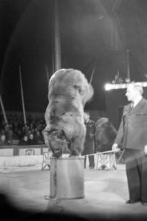 ARH NL Dierssen 1020/0015, Zirkus Althoff, 1950