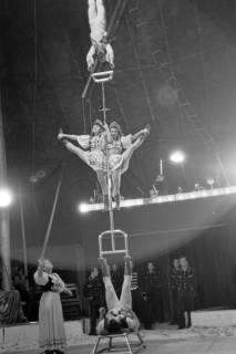 ARH NL Dierssen 1020/0016, Zirkus Althoff, 1950