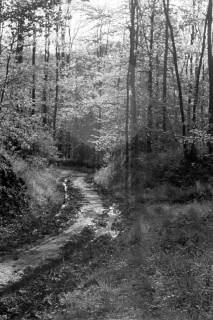 ARH NL Dierssen 1022/0017, Wald bei Gestorf, 1950