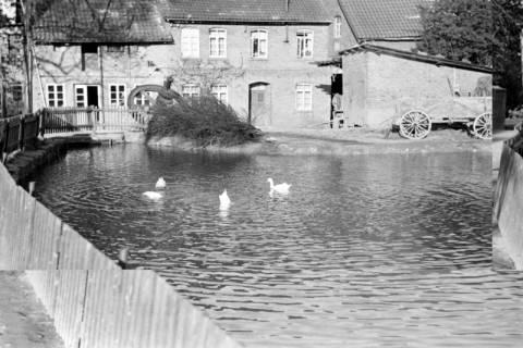 ARH NL Dierssen 1023/0010, Dorfteich mit Enten, 1950