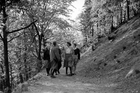 ARH NL Dierssen 1027/0014, Ausflug mit dem Niedersachsen Tanz-Express nach Bad Harzburg, 1950
