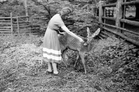 ARH NL Dierssen 1028/0020, Freundin von Gerhard Dierssen mit Reh im Saupark, 1950
