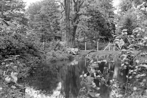 ARH NL Dierssen 1032/0003, Stadtpark, Springe, 1950