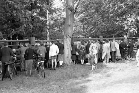 ARH NL Dierssen 1032/0005, Zuschauer im Wisentgehege, Springe, 1950