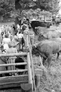 ARH NL Dierssen 1032/0009, Zuschauer im Wisentgehege, Springe, 1950