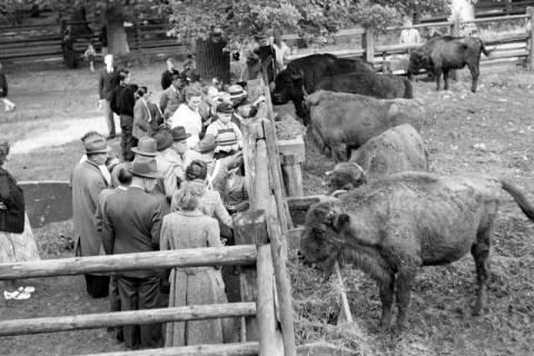 ARH NL Dierssen 1032/0010, Zuschauer im Wisentgehege, Springe, 1950