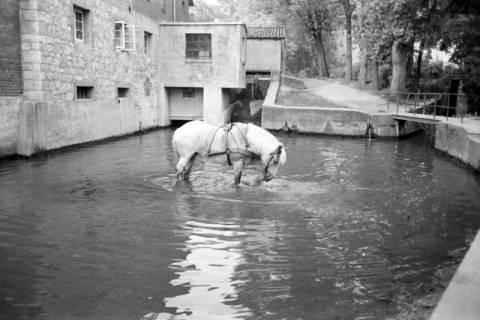 ARH NL Dierssen 1036/0023, Pferde im Mühlenlook mit Wehr und Turbinenanbau im Hintergrund, Rössing, 1950