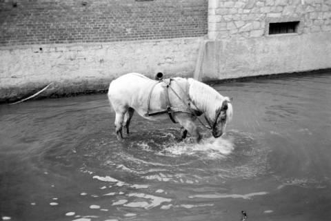 ARH NL Dierssen 1036/0024, Pferde im Mühlenteich, Rössing, 1950