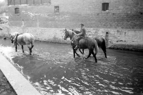 ARH NL Dierssen 1036/0026, Pferde im Mühlenteich, Rössing, 1950