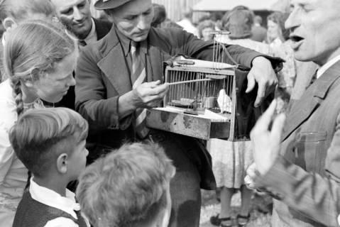 ARH NL Dierssen 1043/0006, Vogelhändler auf dem Sängerfest, Gestorf, 1950