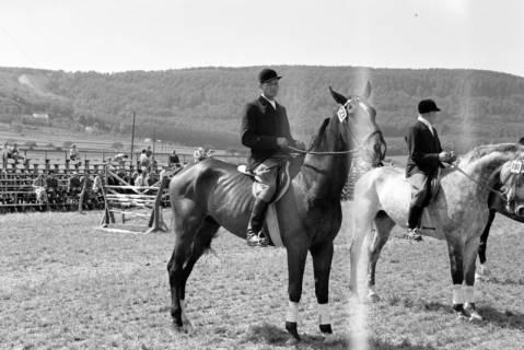 ARH NL Dierssen 1046/0014, Reitturnier, Springe, 1950