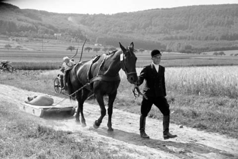 ARH NL Dierssen 1046/0020, Reitturnier, Springe, 1950