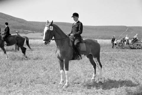 ARH NL Dierssen 1046/0021, Reitturnier, Springe, 1950