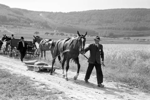 ARH NL Dierssen 1046/0022, Reitturnier, Springe, 1950