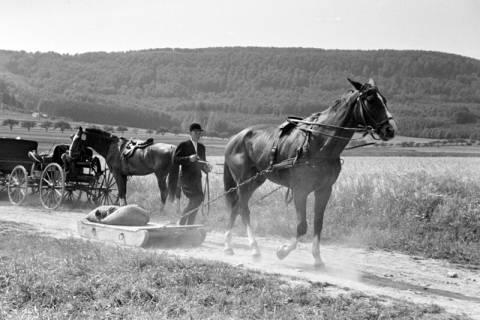 ARH NL Dierssen 1046/0023, Reitturnier, Springe, 1950