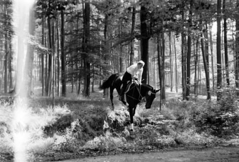 ARH NL Dierssen 1047/0010, Reitturnier, Springe, 1950