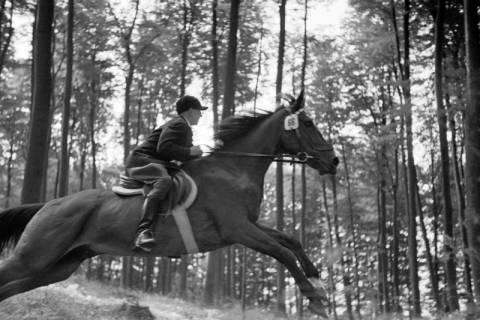 ARH NL Dierssen 1047/0022, Reitturnier, Springe, 1950