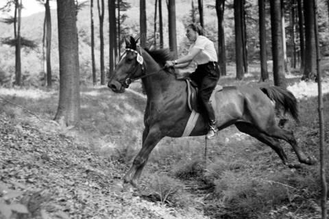 ARH NL Dierssen 1047/0027, Reitturnier, Springe, 1950