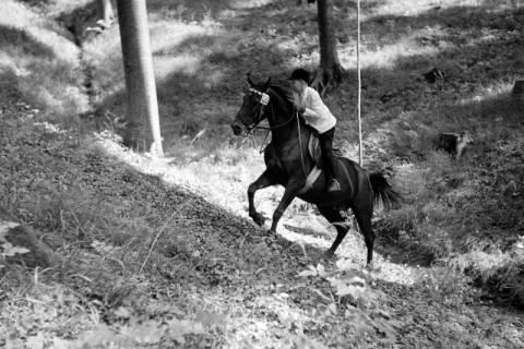 ARH NL Dierssen 1048/0009, Reitturnier, Springe, 1950