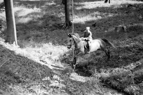 ARH NL Dierssen 1048/0010, Reitturnier, Springe, 1950