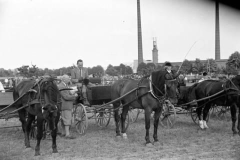 ARH NL Dierssen 1048/0012, Reitturnier, Springe, 1950