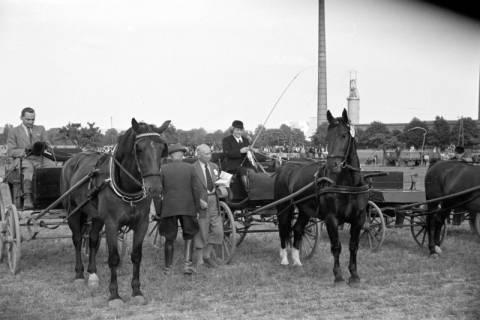 ARH NL Dierssen 1048/0013, Reitturnier, Springe, 1950