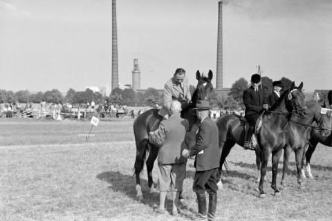 ARH NL Dierssen 1048/0014, Reitturnier, Springe, 1950