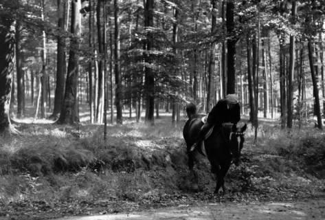 ARH NL Dierssen 1048/0021, Reitturnier, Springe, 1950