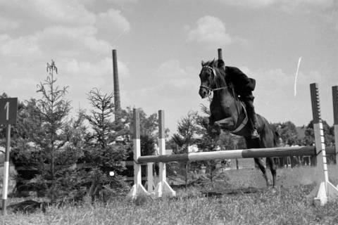 ARH NL Dierssen 1048/0025, Reitturnier, Springe, 1950