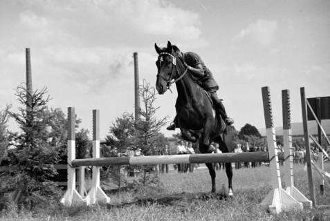 ARH NL Dierssen 1049/0004, Reitturnier, Springe, 1950