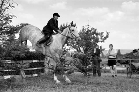 ARH NL Dierssen 1049/0006, Reitturnier, Springe, 1950