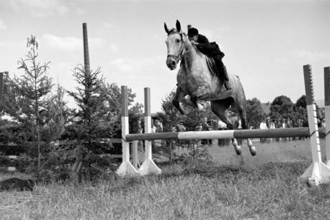 ARH NL Dierssen 1049/0007, Reitturnier, Springe, 1950