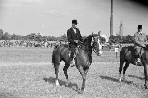 ARH NL Dierssen 1049/0014, Reitturnier, Springe, 1950