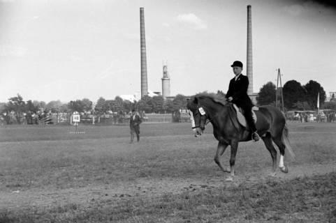 ARH NL Dierssen 1049/0019, Reitturnier, Springe, 1950