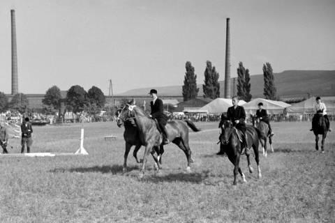 ARH NL Dierssen 1049/0022, Reitturnier, Springe, 1950
